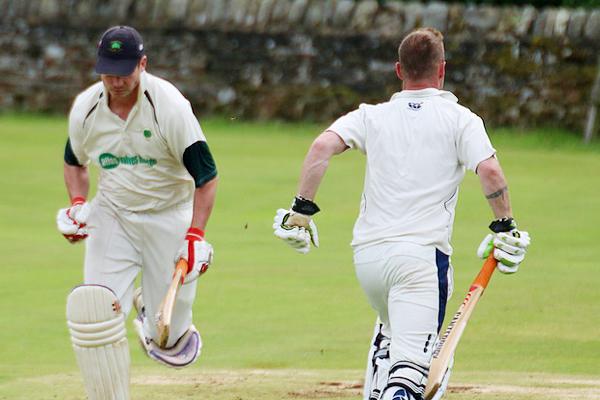 Cricket - Foto generica - CC0 Public Domain