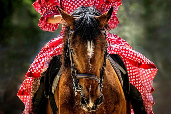 Italia-Russia, accordo tra Final Furlong e Hipposphere sul mondo dei cavalli. Le novità